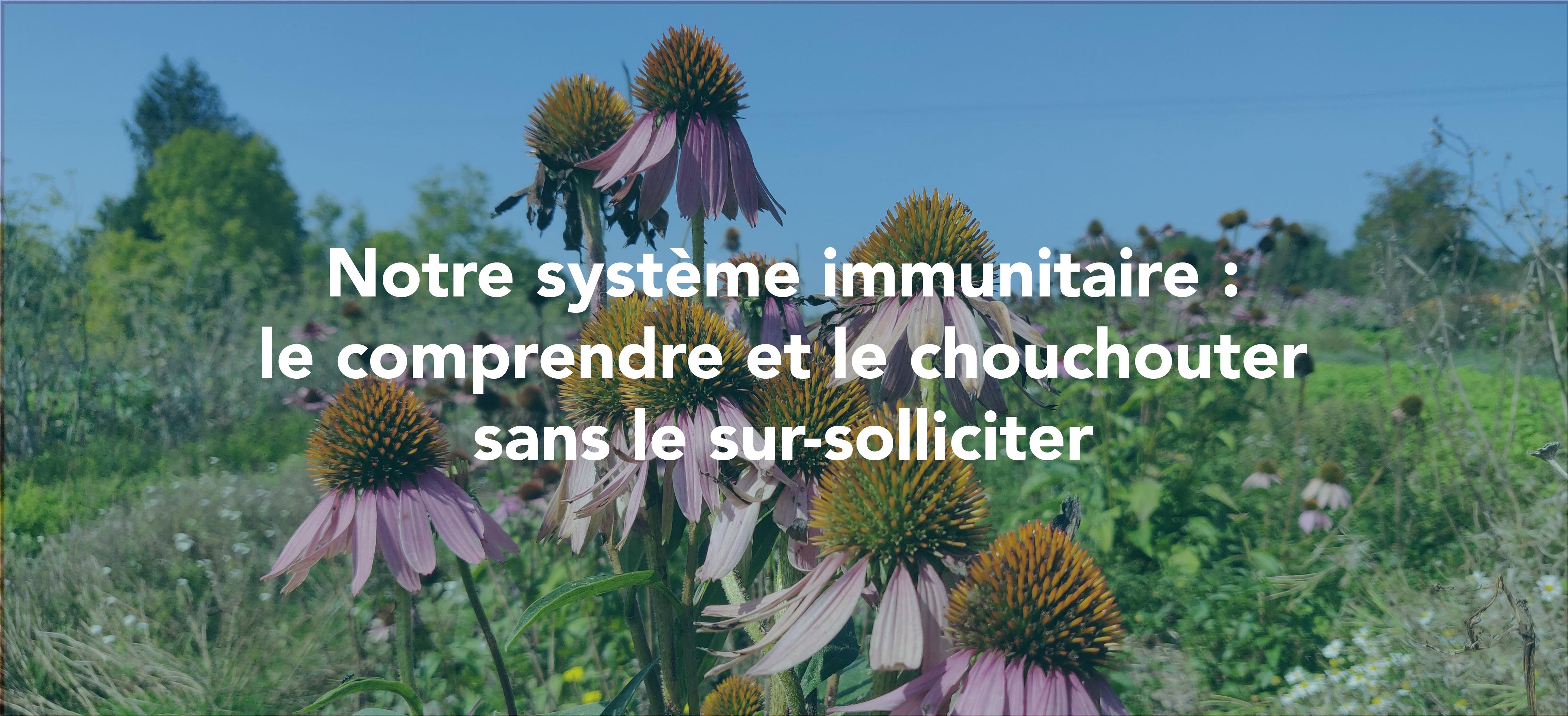 Le grand mystère du système immunitaire
